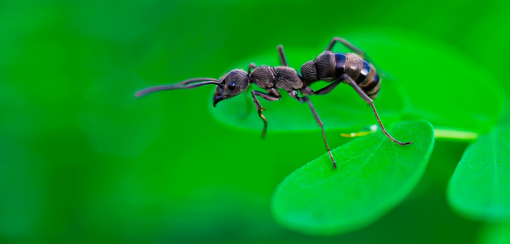 extermination-de-fourmis-insectes-nuisibles